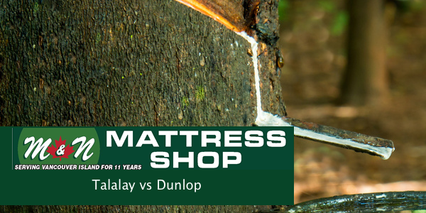talalay-vs-dunlop-latex