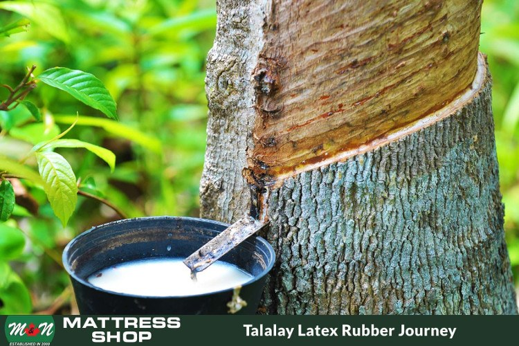 talalay-latex-rubber-journey